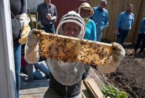 http://dustinbajer.com/wp-content/uploads/2016/12/Beekeeping-Tips-Dustin-Bajer.jpg