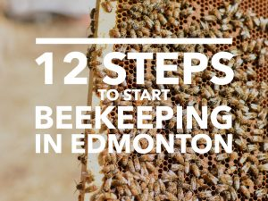 Steps to Start Beekeeping in Edmonton