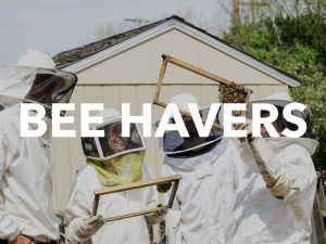 Bee Havers: The Importance of small-scale and hobby beekeepers.