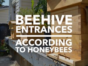 Beecentric Hive, Beehive Entrances According To Honeybees